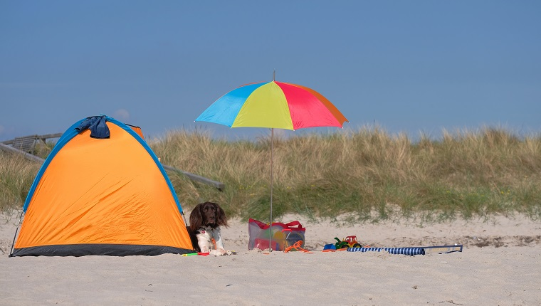 Dog Relaxing In Tent At Sandy Beach Against Clear Sky