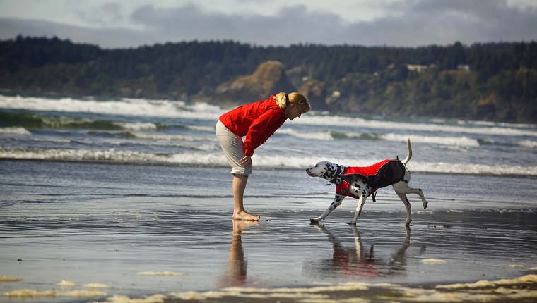 What Kind Of Sunscreen Is Best For Dogs