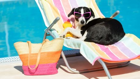 Sunscreen For Dogs: Everything You Need To Know