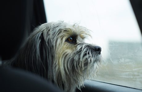 More States Now Have Laws About Leaving Dogs In Cars