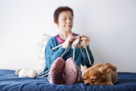 Knitting For Dogs? Here's Some Ideas!