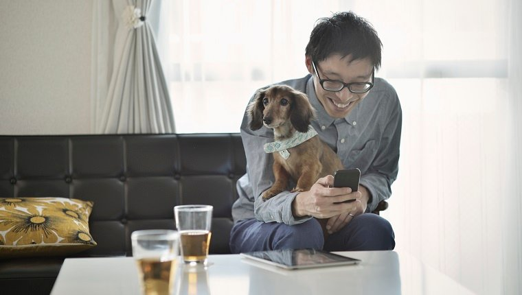 Man sitting on a sofa and using the smartphone with dog,The dog is miniature dachshund