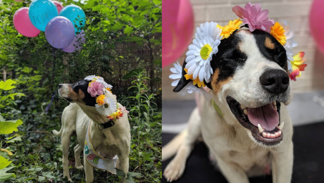 Pregnant Foster Dog's Beautiful Maternity Photo Shoot Is Too Adorable