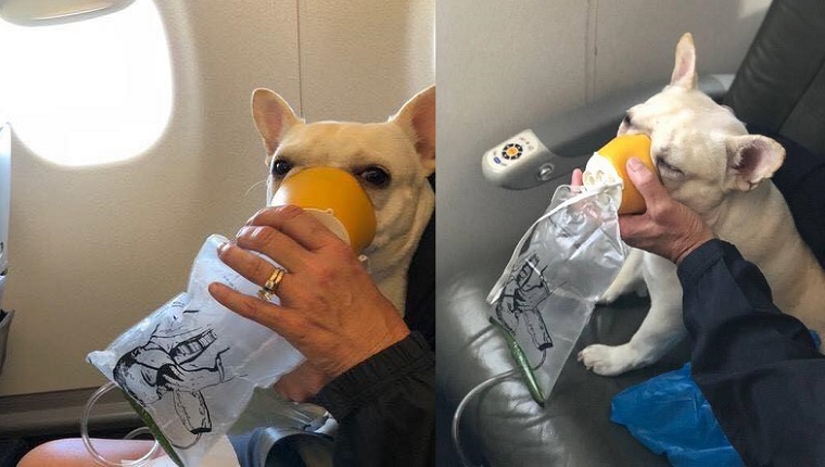 jetblue flight attendants save suffocating dog with oxygen