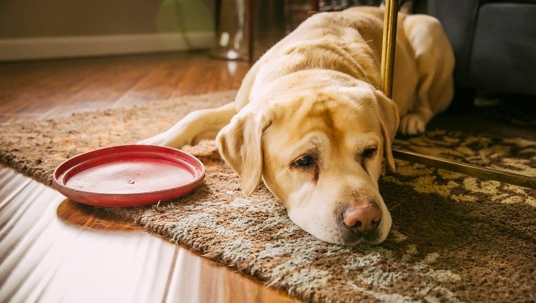 Can You Give Dogs Loperamide