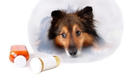 Can I Give My Dog Aspirin? Is Aspirin Safe For Dogs?