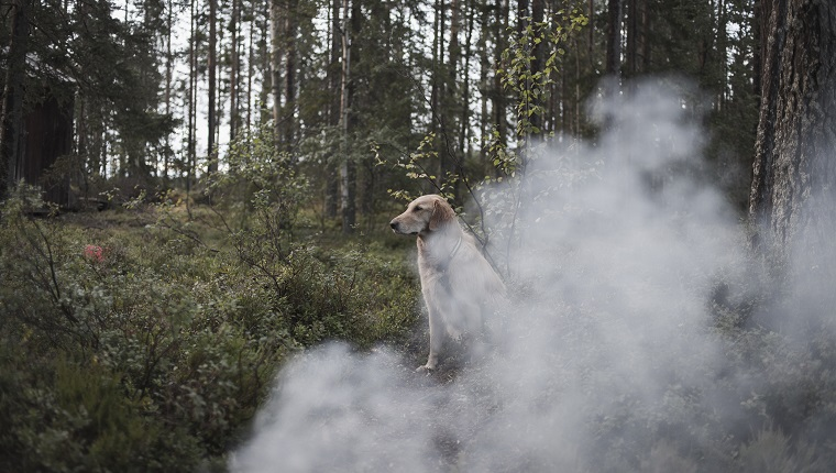 Dog sitting by smoke in forest