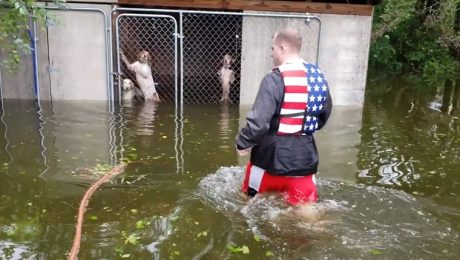 8 Most Heroic Dog Rescues From Hurricane Florence