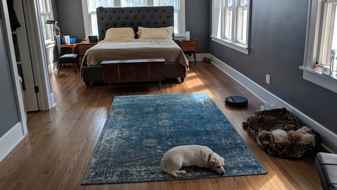 Dogs in master bedroom with eufy robovac