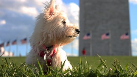 House Of Rep. Finally Passes Bill That Bans Killing And Eating Dogs And Cats In U.S.