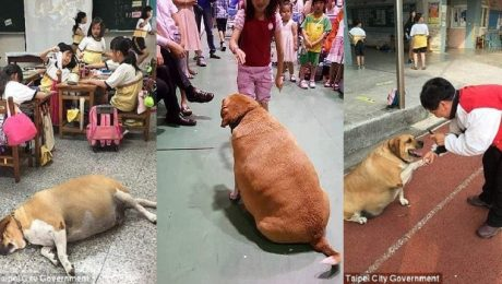 Students Banned From Feeding School Dog After He Gets Too Obese