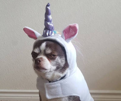 10 Unhappy Dogs In Halloween Costumes [PICTURE GALLERY]