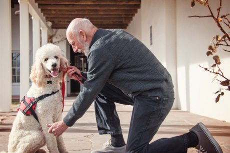 How Service Dogs Can Help Stroke Patients