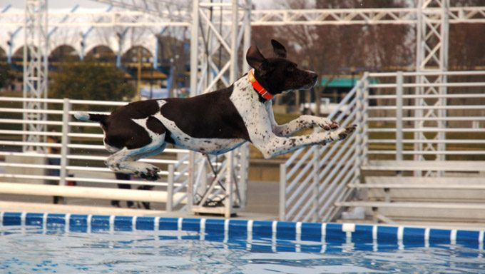 dock jumping for dogs