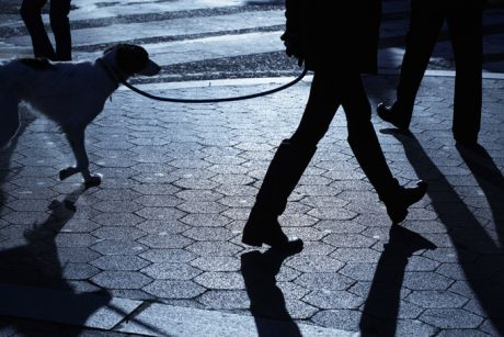 4 Tips For Safely Walking Your Dog At Night
