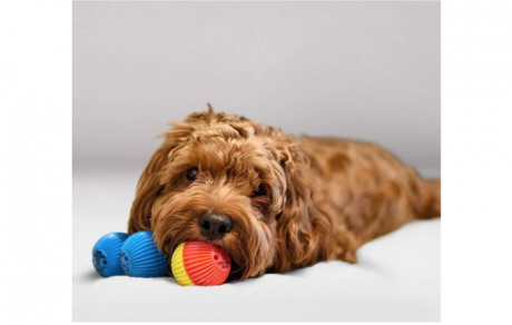 10 Awesome Indoor Gifts To Keep Your Pup Busy In Winter