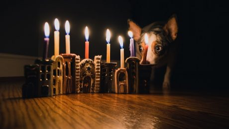 8 Best Hanukkah Gifts For Your Dog In 2018