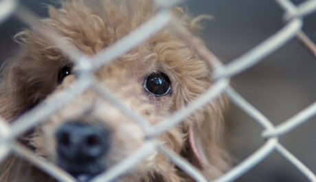 Atlanta Bans Retail Pet Stores From Selling Puppy Mill Animals