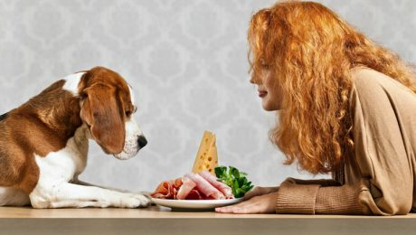 Can Dogs Eat Ham? Is Ham Safe For Dogs?