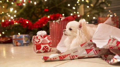 10 Dogs Who Can't Wait To Tear Open Christmas Gifts [VIDEOS]