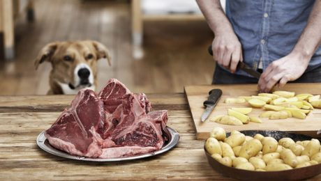 Can Dogs Eat Potatoes? Are Potatoes Safe For Dogs?