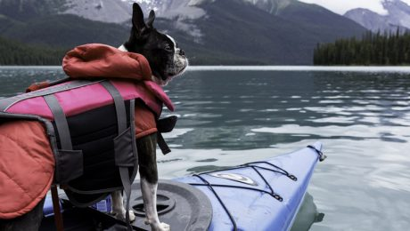 What To Consider When Buying A Life Jacket For Your Dog