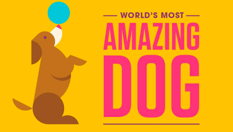 World's Most Amazing Dog Competition