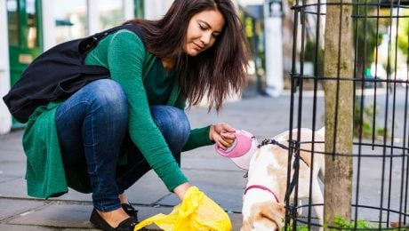 Composting: A Green Alternative To The Plastic Dog Poop Bag