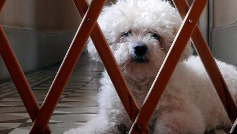 dog behind dog gate. there are alternatives to dog gates, too.