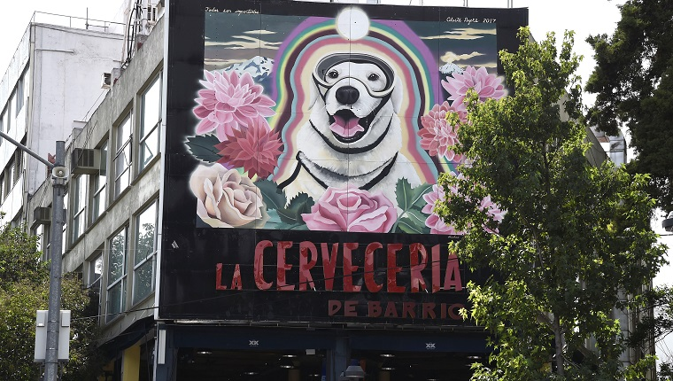 VIew of a large mural paint (R) in honor to Frida, the Mexican Navy's rescue dog in Mexico City on October 10, 2017, three weeks after the earthquake that killed more than 300 people. / AFP PHOTO / ALFREDO ESTRELLA