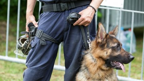K9 Dogs' Training Will Change With Marijuana Legalization
