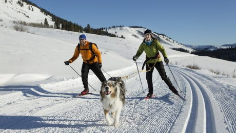 Skijoring: Fun Exercise To Stay Active With Your Dog In Winter