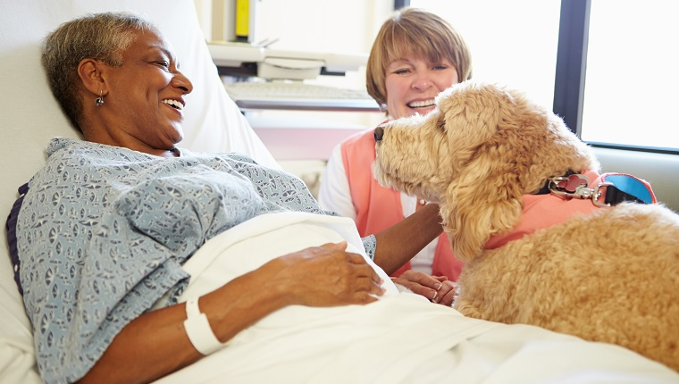 Pet Therapy Dog And Handler Visiting Senior Female Patient In Hospital