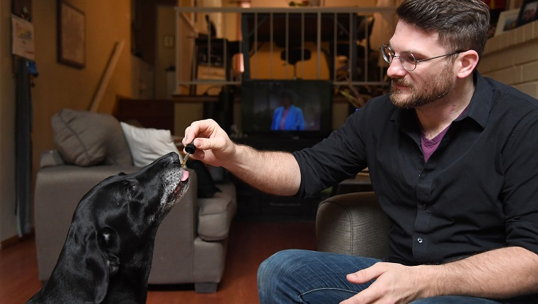 Brett Hartmann gives his dogs Cayley, a six-year-old-Labrador Retriever drops of a cannabis based medicinal tincture to treat hip pain and anxiety, June 8, 2017 at his home in Los Angeles, California. It's early morning, just after breakfast, and six-year-old Cayley is wide awake, eagerly anticipating her daily dose of cannabis.The black labrador, tail wagging, laps up the liquid tincture owner Brett Hartmann squirts into her mouth, a remedy he uses morning and evening to help alleviate Cayley's anxiety.As the multi-billion dollar medical and recreational marijuana industry for humans blossoms in the United States, so is a new customer base -- animals.
