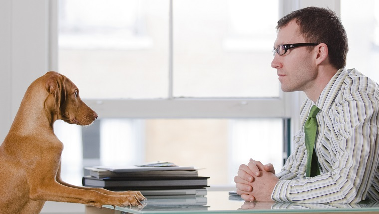 Businessman at a desk with his dog