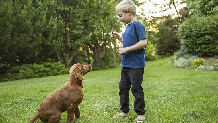 Caucasian boy training dog in grass