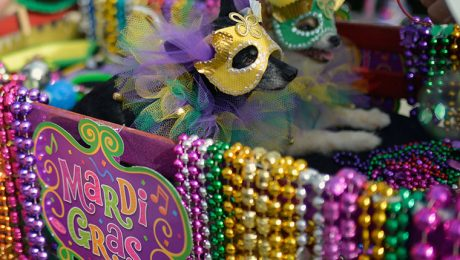Happy Mardi Gras! 20 Dogs Celebrating Fat Tuesday [PICTURES]
