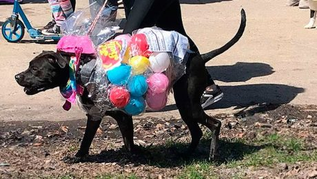DogTime Visited The Easter Dog Parade In Chicago's Horner Park! [PICTURES]