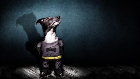 Heroic & Villainous Dog Names Inspired By DC Extended Universe Movies