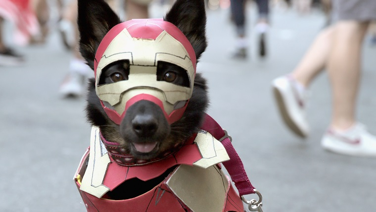 SAN DIEGO, CA - JULY 19: A dog in cosplay attends 2018 Comic-Con International on July 19, 2018 in San Diego, California.