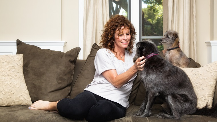 Pet sitter or dog owner on a couch in an upscale home giving attention to two dogs looking at her