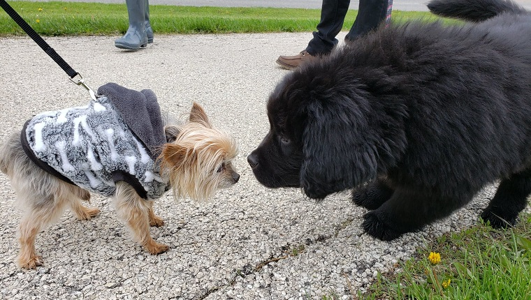 dogs met at charity walk