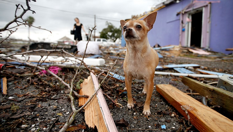 NEW ORLEANS, LA - FEBRUARY 07: A dog stands in the left behind by a tornado on February 7, 2017 in New Orleans, Louisiana. According to the weather service, 25 people were injured in the aftermath of the tornado.
