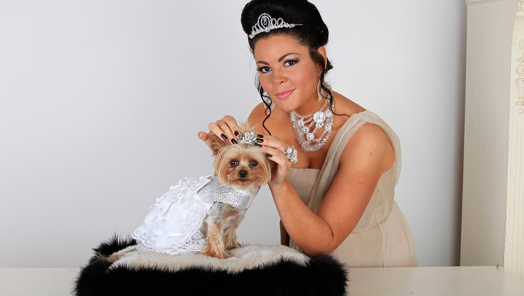 "CHELMSFORD, UNITED KINGDOM - MAY 16: ***EXCLUSIVE*** Louise Harris poses with her pet Yorkshire Terrier Lola on May 16, 2011 in Chelmsford, England. Pet-mad Louise Harris, from Chelmsford, Essex,has always treated her dogs like royalty and has now had two tiaras custom-made so her Yorkie Lola can look just like Kate Middleton on her wedding day. Louise, 32, spent GBP£20,00.000 on a dog wedding for Yorkshire Terrier Lola earlier this year, where the pooch married a Chinese Crested dog called Mugly. But while that bash was lavish, Louise, got even more ambitious after watching the royal wedding of Prince William and Kate Middleton last month. Now Louise - who has spent more than GBP£100,000.00 on Lola and her other two Yorkshire Terriers - has had a pair of posh headpieces constructed at GBP£400 each so Lola can look like a dog version of the royal bride. Both are meant to be mini replicas of the tiara Catherine, Duchess Of Cambridge -wore when she married Prince William on April 29. While Kate's version was a priceless Cartier 'halo' tiara loaned to her by the Queen, Lola's were pieced together by bespoke jewellers Latimer Couture using Swarovski crystal and genuine silver. Wearing her own GBP£500 bespoke tiara and matching necklace, Louise said: ""I've always seen Lola as my little princess, so it was only fitting she had a tiara just like Kate's. ""Now I can call her the Duchess of Yorkshire Terrier!"""