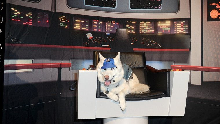 LAS VEGAS, NV - AUGUST 07: Star Trek dog sits in the Captain Chair on day 5 of Creation Entertainment's Official Star Trek 50th Anniversary Convention at the Rio Hotel & Casino on August 7, 2016 in Las Vegas, Nevada.