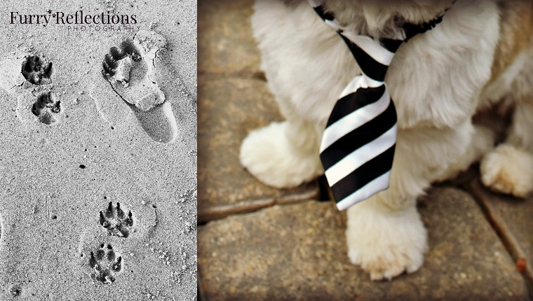 paw and footprints on beach, small dog with tie