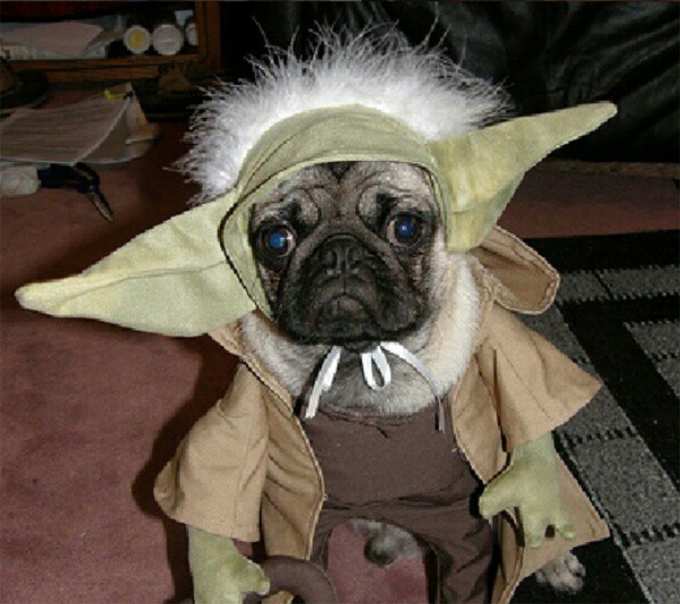 10 Best Halloween Costumes For Pugs Picture Gallery Dogtime