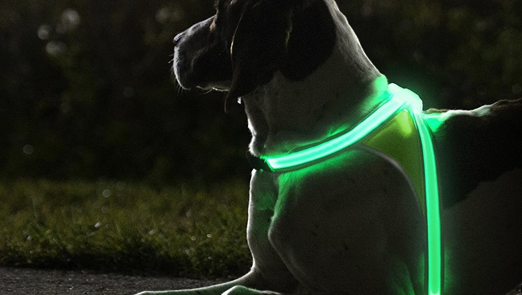 LED Light Up Dog Harness