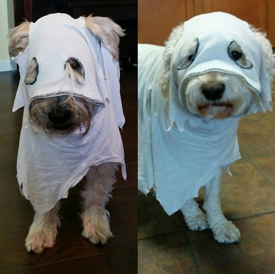 ... Dog Costume Ideas Halloween 23 Awesome Dog Halloween Costume Ideas Pictures Dogtime ... : dog ghost halloween costumes  - Germanpascual.Com