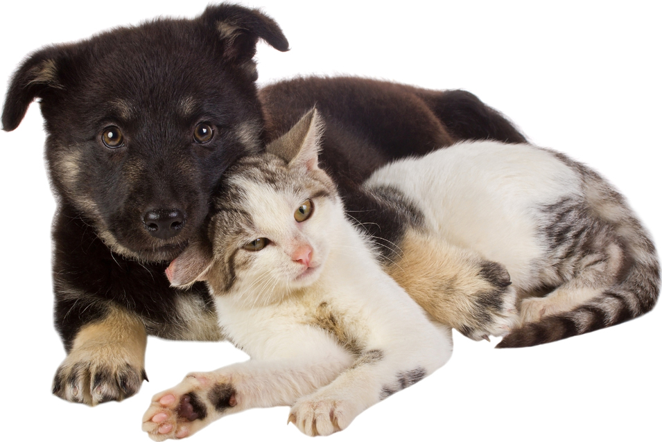 For Valentines Day 25 Cute Dog And Cat Pictures Dogtime